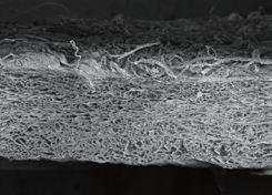 vedere-membrana